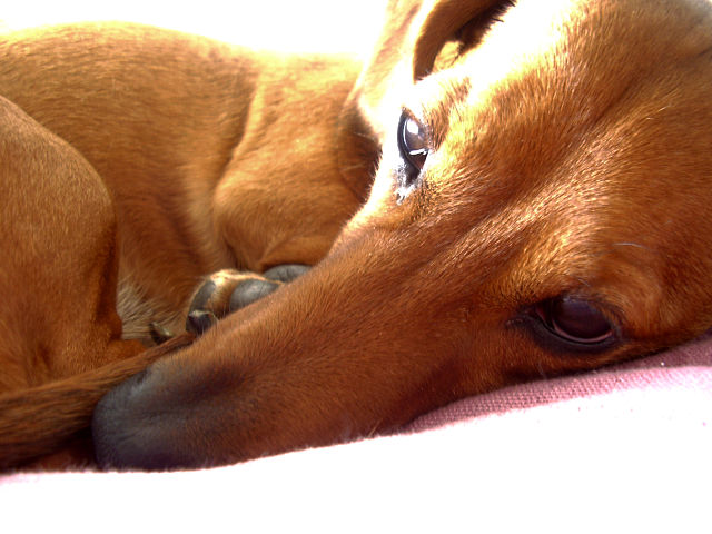 dog curled up napping in the sun