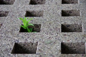 small plant growing through hole in cement