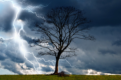 Image of a Tree standing in a lightning storm